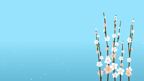 4K Easter Blossom Sakura With Flowers On Blue Background Card or Commercial Temp Animation