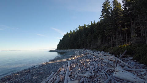 Aerial over driftwood covered beach in British Columbia Footage