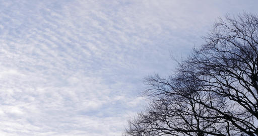 Pan of cloudy sky and big tree without leafs Footage