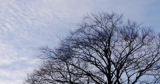 Pan of cloudy sky and big tree without leafs Stock Video Footage