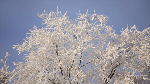 Beautiful snowy trees Footage