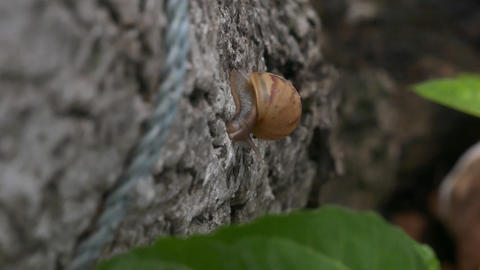 Snail crawling on a tree bark Filmmaterial