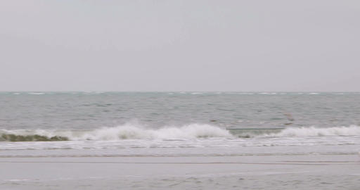 Birds on North Frisian island beach of Amrum in Germany Footage