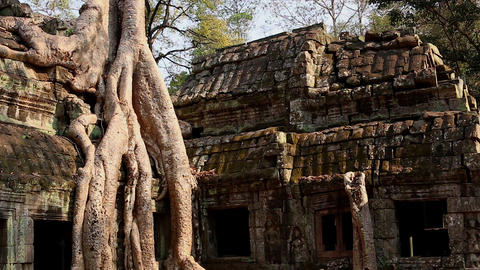 Cambodia Angkor Wat Ta Prohm temple Tomb Raider tree roots ruins dolly Footage