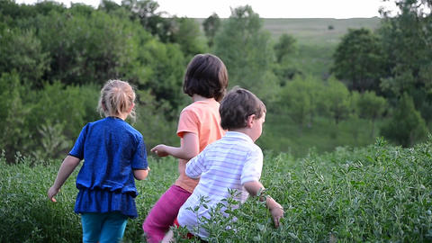 Children gather insects in a field of alfalfa from grandparents garden 02 Footage