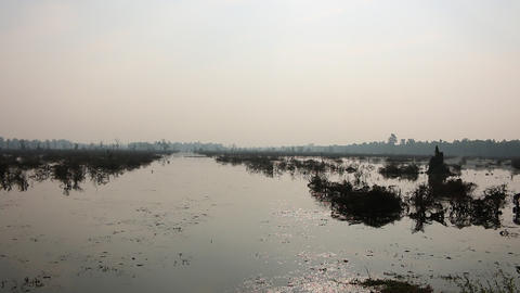 Cambodia swamp flooded land Angkor Wat Live Action