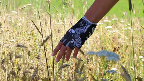 Mountainbiker hand with gloves straving through a corn and flower field with the Live Action