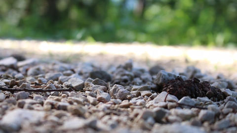 Mountainbiker wheel passing on a gravel track stones detail fir cone Footage