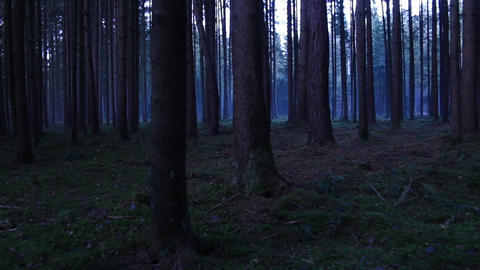 Walking through the forest steadycam shot at dusk dark setting and ambience Footage