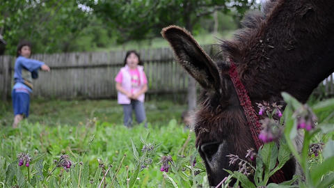 Donkey that graze in the garden where children play and run a few trees 2 Footage