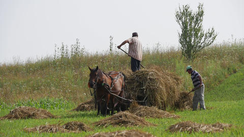 Men charged with iron forks hay dry on the meadow in a cart pulled by horse 99 Footage