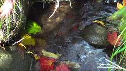 Autumn leaves coloring Autumn, fallen leaves flowing in a stream Footage
