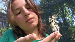 Colorful And Friendly Butterflies Butterfly Park Phuket Thailand stock footage
