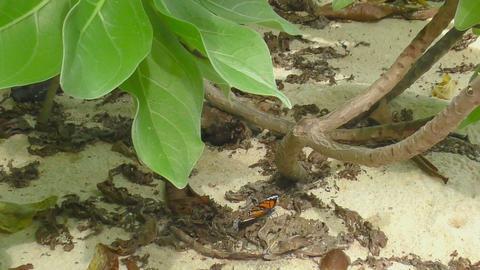 Monarch butterfly Footage