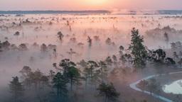 Epic Marshland