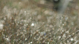 Dew covered grass on a summer morning Footage