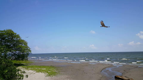 Vultures fly by at the beach Footage