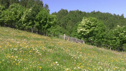 Field with colorful flowers surrounded by a wooden fence at the edge of dense fo Footage