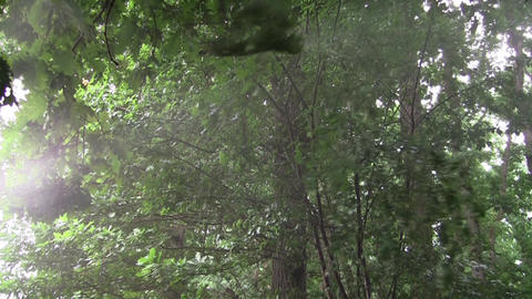 Water drops falling on forest vegetation 2 Footage