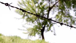 tree behind wire 1 Footage