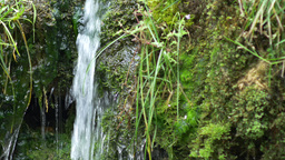 Small stream flowing over mossy waterfall Footage