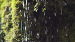 Tiny waterfall closeup dribbles from moss Footage