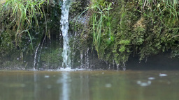 Small waterfall drops from a mossy rock into river Footage