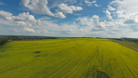 aerial view on beautiful flowering rapeseed field Footage