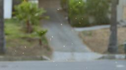 Gnats swarming Footage