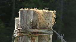 Post pilings of old pier with grass Footage