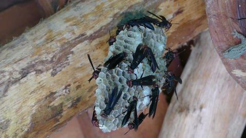 A lizard kill a fly in an big nest Footage