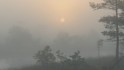 Sunrise over marshland through fog Footage