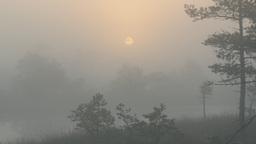 Sunrise over marshland through fog Footage