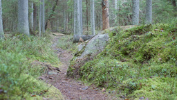 Dolly shot revealing a large rock on a mossy forest floor on a hiking trail Footage