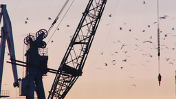Static silhouetted harbor crane during golden hour Footage