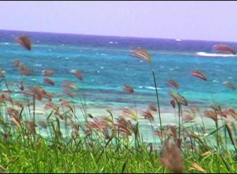 Cuban Grass Qt 6 Dv stock footage