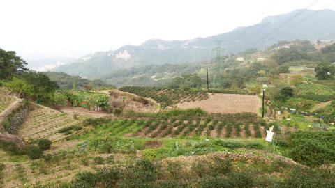 Tea plant terrace fields, panoramic mountain slope view, rather cloudy Footage