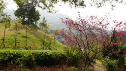 Meadow on the hillside, mountains area, blossom tree Footage