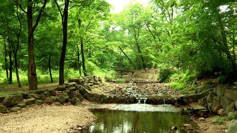 Landscape of Korea National Arboretum in Pochun-si, Gyeonggi-do Province, Korea Live Action