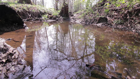 Eye water in the forest where trees are reflected above 61 Footage
