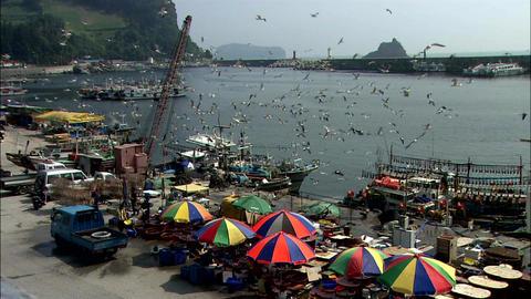 Seascape of Ulleungdo Island in Uljin-gun, Gyeongbuk, Korea ภาพวิดีโอ