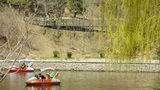 Dense willows by sparkling lake,Tourists cruise ships on water Footage