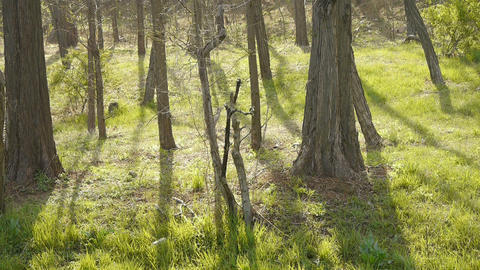 Sun shining on the woods.dense forest,Jungle,shrubs,wetlands Stock Video Footage