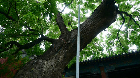 Chinese ancient building & lush old green... Stock Video Footage