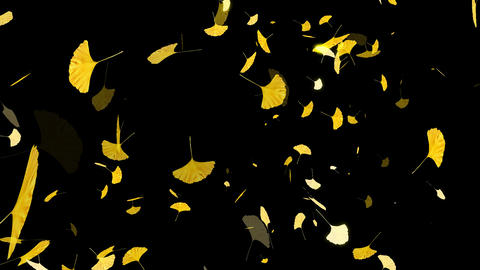HD Falling Ginkos Leaves Animation Stock Video Footage