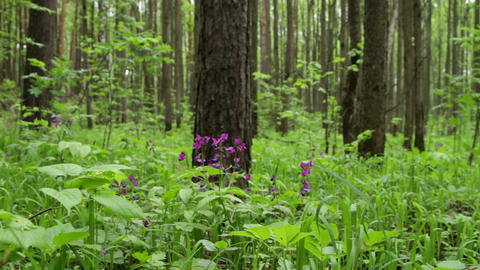 spring forest Stock Video Footage