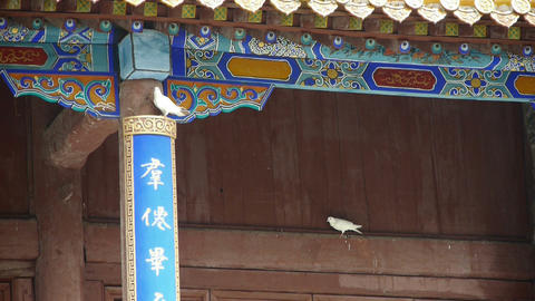 White doves bird under eaves.& Chinese ancient... Stock Video Footage