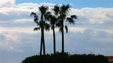 palms 1 Stock Video Footage