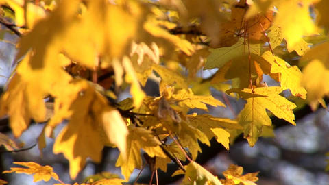 autumn 23 Stock Video Footage
