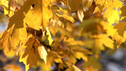 autumn 23 Stock Video Footage